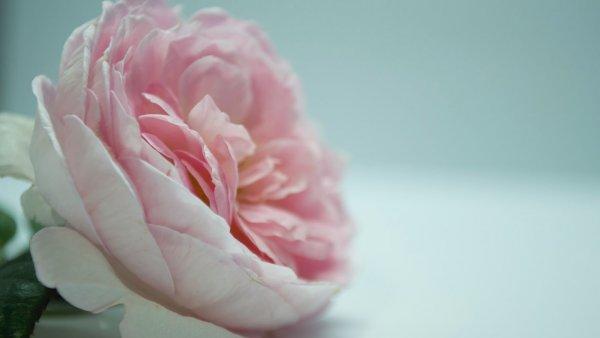 Låt din sexuella hälsa blomma, ja tack men hur?