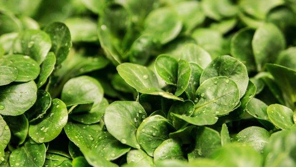 grön-växt